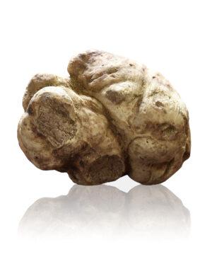 tartufo-bianco-san-miniato