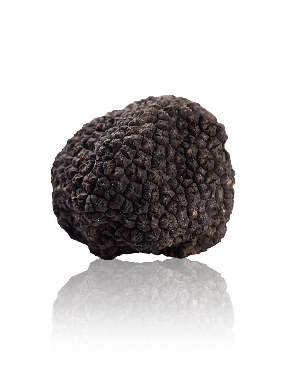 tartufo-nero-estivo