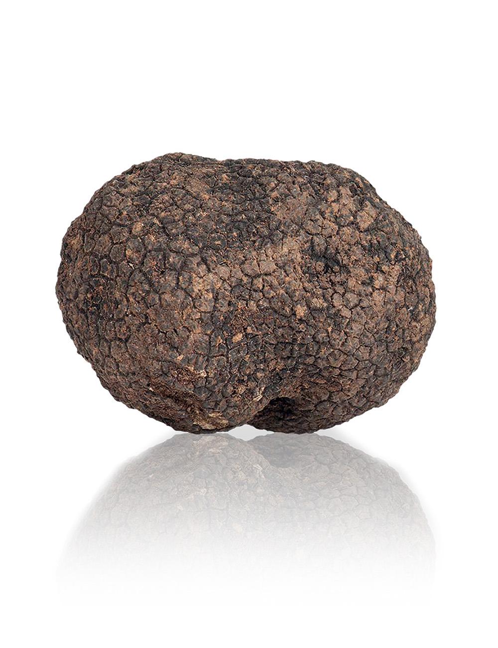 tartufo-nero-uncinato